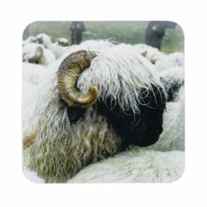 Valais Black Sheep Coasters