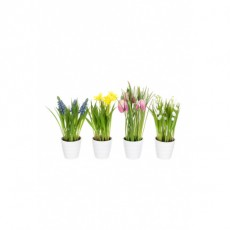 Potted Spring Flowers Astd
